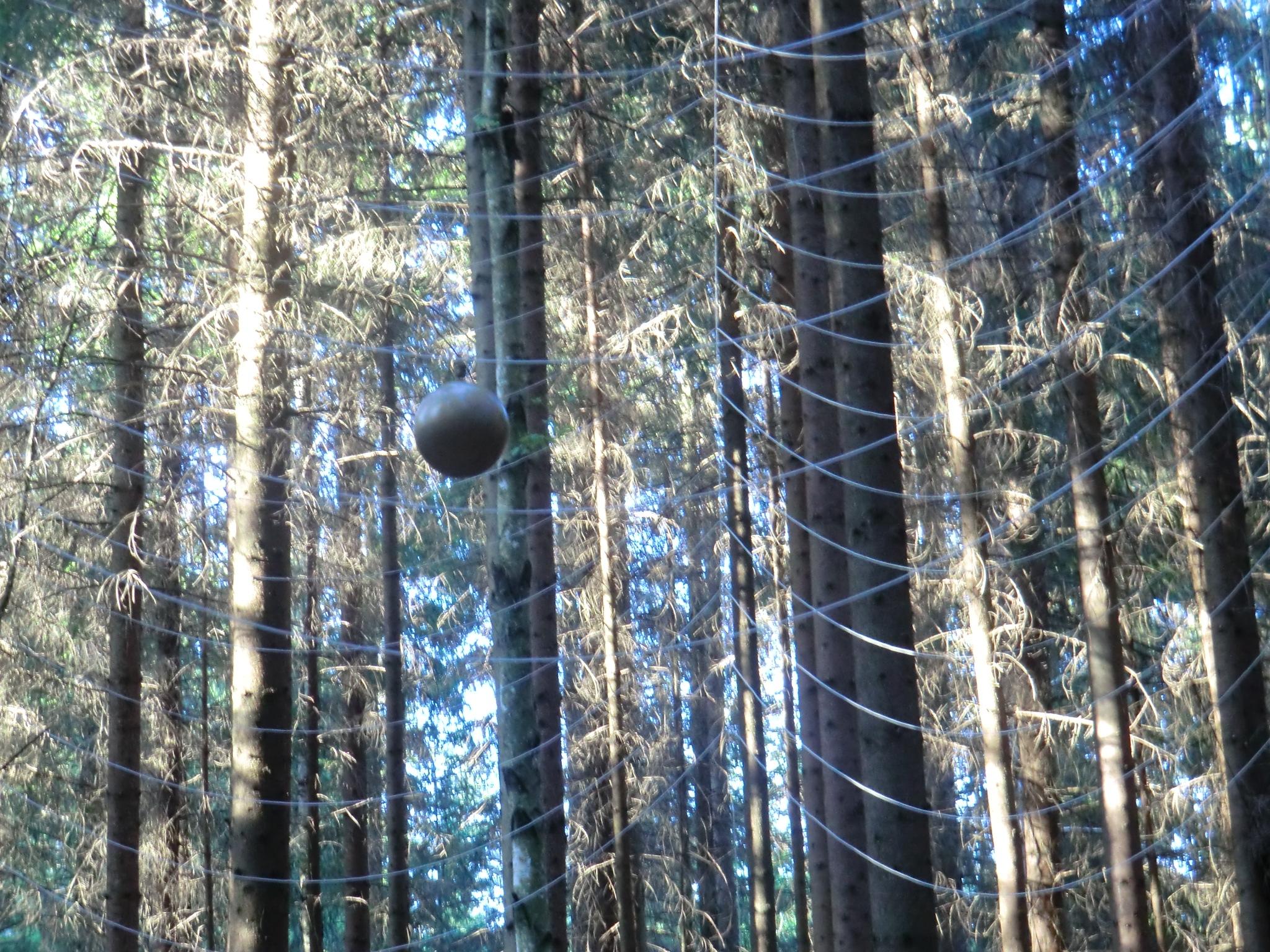 skogskatedralen
