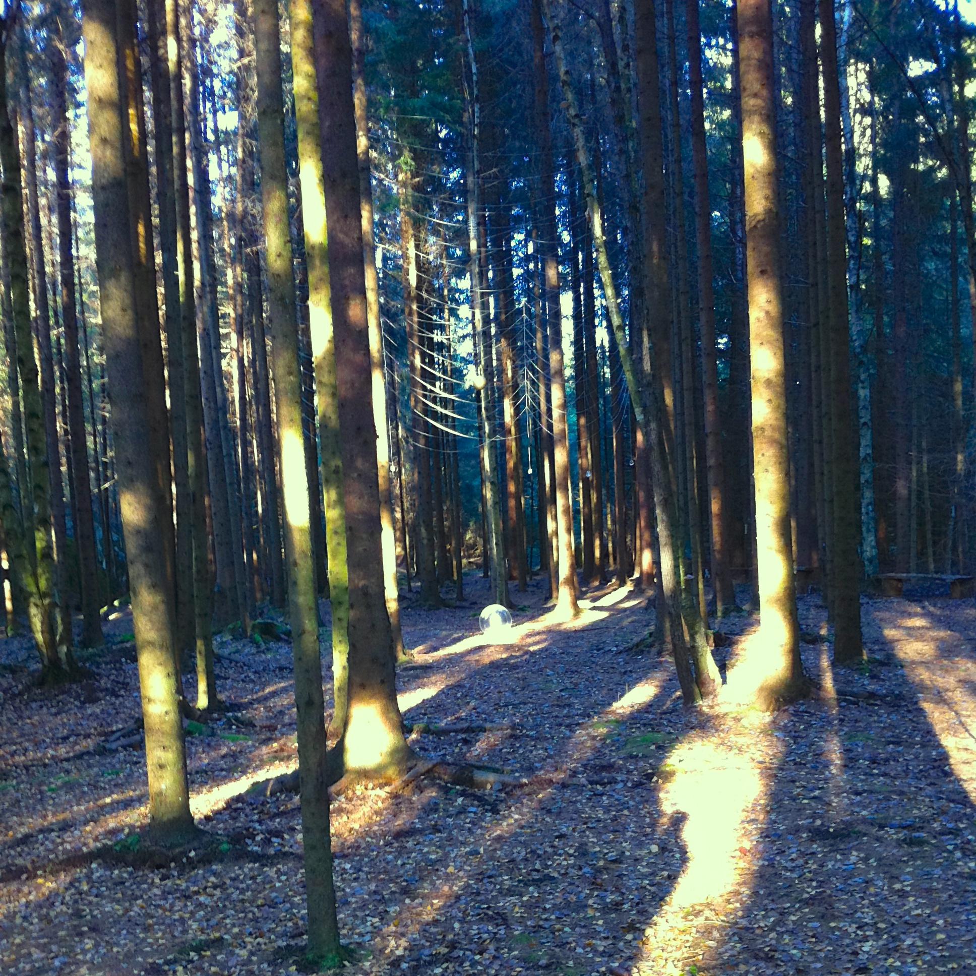 Skogskatedralen på Stensjöäng