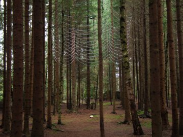 skogakatedralen3