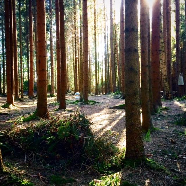 Vårkrattning i Skogskatedralen