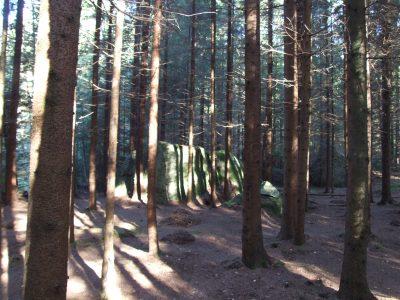 Skogskatedralen på Stensjöäng.