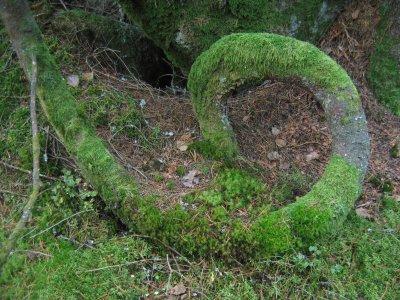Ett träd som har en djup symbolik